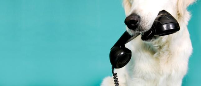 130223-Dog-Phone-Wide1